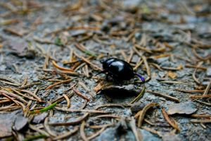 a bugs life 1 by bitstarr