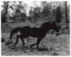 gallop by lupuscrystalus