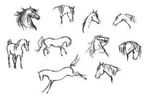 Illustrator Horse Sketches by akuinnen24
