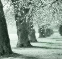 liverpool trees by popp2