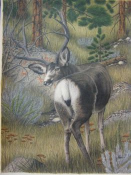 Deer, Pictographs by Towinckdesigns