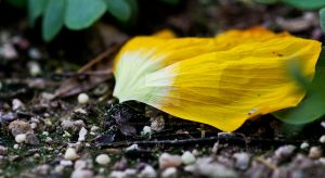 yellow by cw-art-photography