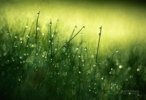 Morning Dew III by Nitrok
