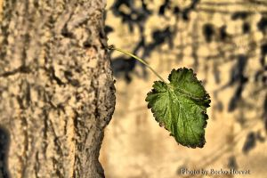 lonley leaf by BorkoH