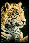 Jaguar Cub: Profile by Flame-of-the-Phoenix