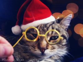 Last Xmas i gave u my glasses by blondepassion