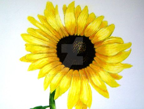 Sunflower by Dora by whimsica