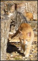Two cats as two tigers... by Flo0orian