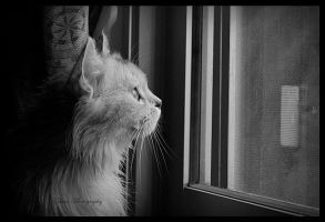 Looking through the window.. by Ehsan84