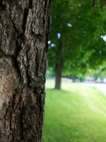 Close up tree. by KristineAdelia