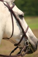 Green Mouth White Horse by Kristy-Kitty