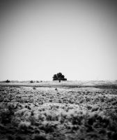 a lone tree by jonesblachowicz