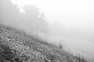 Morning Mists by BuuckPhotography