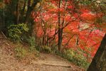 nature walk 2 by rayna23