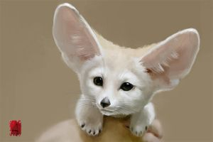 Fennec Fox  by Nutfullin