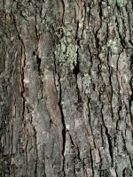 Tree Bark-1 by Rubyfire14-Stock