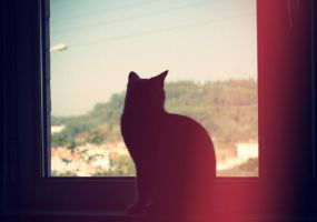 Silhouette by AnaRosaPhotography