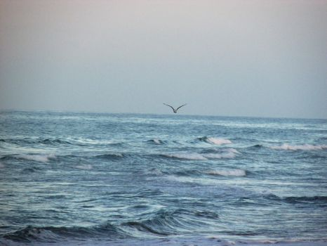 Photography - sea with bird by EnemyoftheSteak