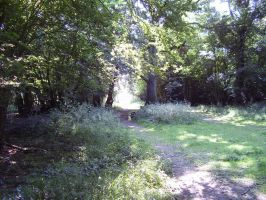 Hatfield forest 3 by pan77155