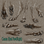 sketch - Canine Hind Paw by ArnaTornwolf