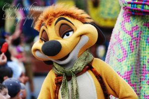 Timon by CaitrinXlXAnneliese