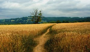 The Cotswold Way IV by younghappy