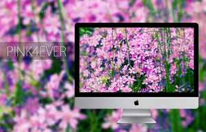 Pink4Ever - Wallpaper by Daduunka