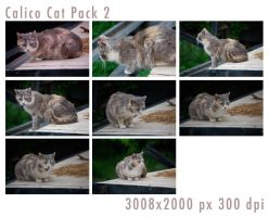 Calico Cat Pack 2 by tennyoSTOCK