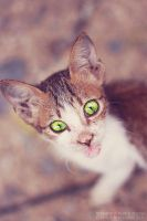 Green Eyed Cat by serafleur