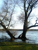 Trees in High Water I by ChaosStocks