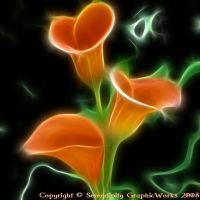 Calla Lillie's in the Dark by Serendipity2006