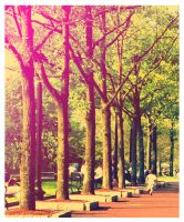 Tree Alley by chiffonshorts