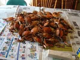 Mess O'Crabs Stock by Stoked-Stock
