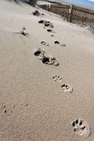 Footprints in the Sand by Valadj