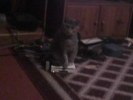 2-tone guarding the Wii by BlackCherry1994