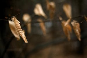 nature 0143 leaf by remigiuszScout