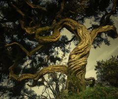 Gorse by lizziess