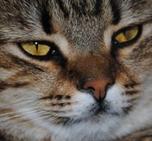 The portrait of a cat 1 by garbo009