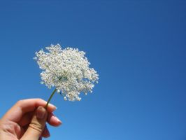 White Flower-Blue Sky by erykucciola-sToCk