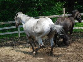 Appaloosa 58 by Spotstock
