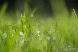 Morning Dew by T-Ann-Photography