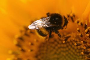 Bumble by uin