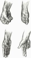 Hands 3 by TheLittleCrow
