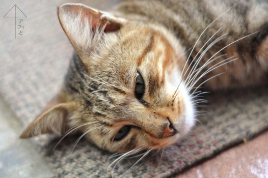 Cat on the Mat by kucing-kucing