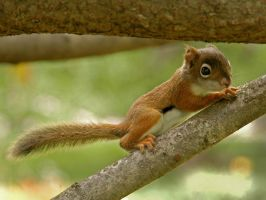 Baby Squirrel  8 by MichelLalonde