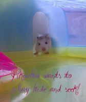 My hamster wanted to play hide and seek. by ASFmaggot