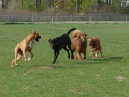 Playful Dog Park Action 15 by FantasyStock