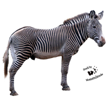 Cut-out stock PNG 81 - zebra profile by Momotte2stocks