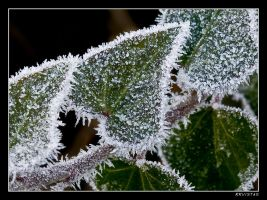 ice leaves detail by RRVISTAS