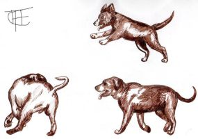 Dog Sketches by Laika-Star